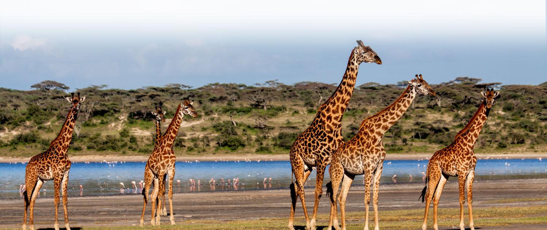Tansania Lodgesafari