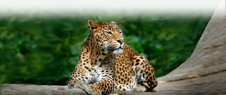 Safari in Serengeti Park
