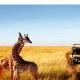 Afromaxx Tansania Safari