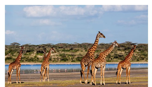 Safari The South Afromaxx Tours