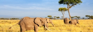 Safaris in Tansania buchen