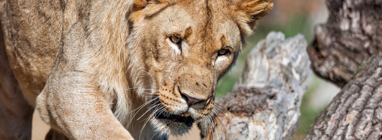 Reisetermin Safari Ngorongoro