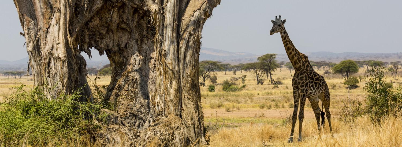 kurze Tansania Safari buchen