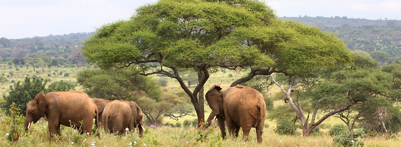 3 Tage Safari Tansania Reisetermin