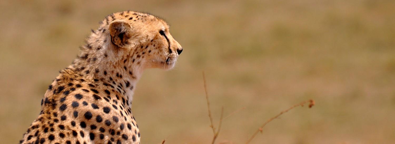 Ngorongoro Krater buchen