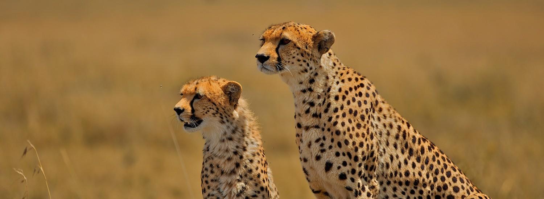 Safari ngorongoro Krater