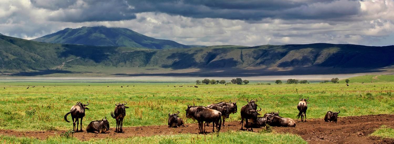 Reiseveranstalter Ngorongoro Krater