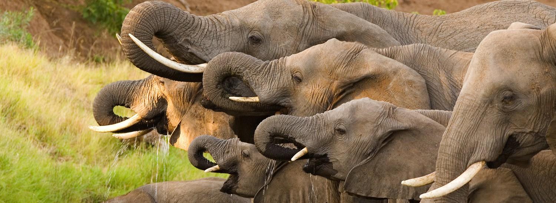 Tansania Safari Preis