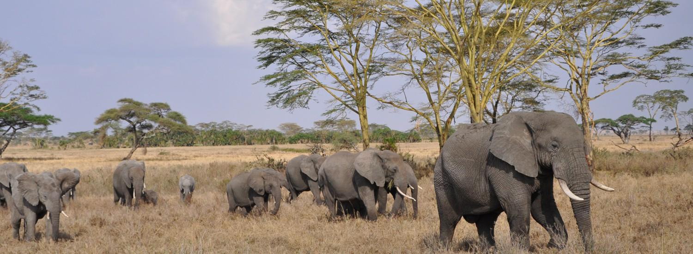 Tansania Klassik Safari bei Vollmond