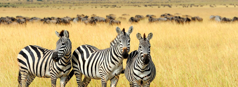 Tansania Klassik mit Pirschfahrt