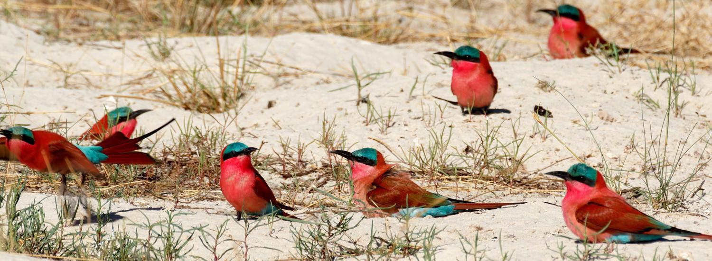 Selous Ruaha Safari kosten