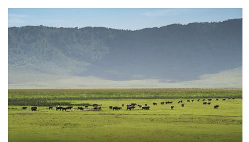Safari Ngorongoro Special Afromaxx