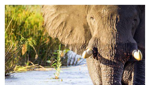 Safari Tansania Klassik Afromaxx