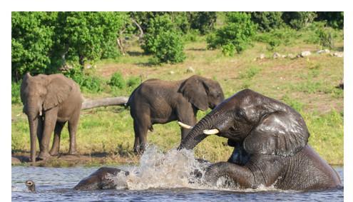 Gorilla Tracking Uganda Reise Kompakt