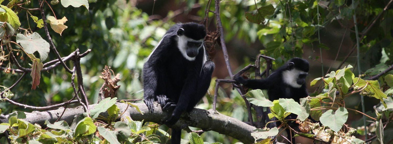Reisetermin Gorilla Tracking