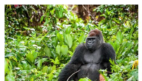 Uganda Reise Klassik - Afromaxx Reisen
