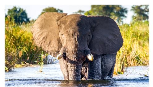 Safari Tanzania Classik- Afromaxx Tours