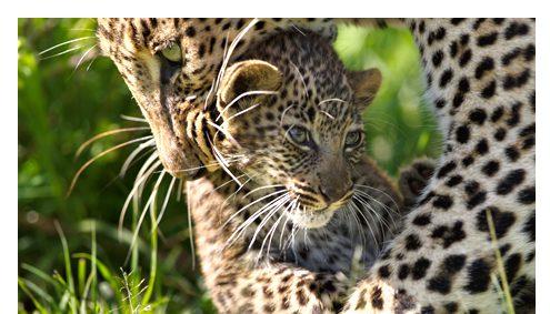 Safari Selous