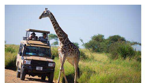 Lodgesafari Serengeti