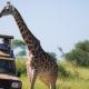 Wie lange sollte eine Safari dauern?