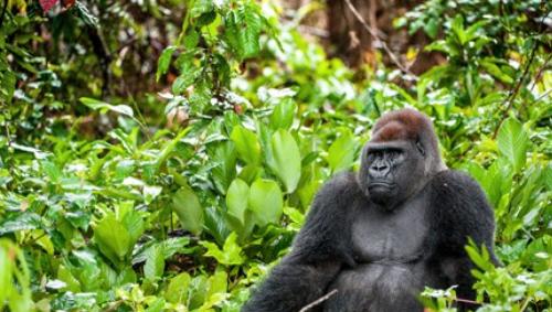 Uganda - Was muss man sehen?
