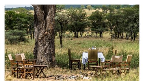 What Hotel on Safari