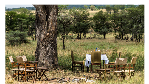 What Hotel on Safari