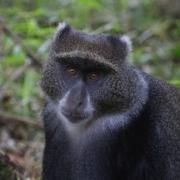 Tansania - Welche Impfungen braucht man?