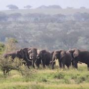Uganda - Wann ist die beste Reisezeit?