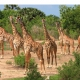 Lodgesafari Grosses Abenteuer