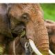 Afromaxx Safari Safi