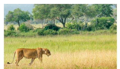 Lodgesafari Tansania Wildnis