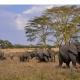 Reisen Afromaxx - Serengeti Safari