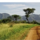 selbstfahrerreise - Tansania auf eigene Faust