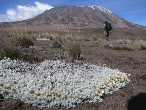 Kilimandscharo: Wie lange dauert die Besteigung?