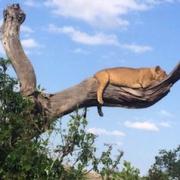 Erste Safari wohin?