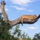 Erste Safari - Wohin? Tipps für das erste Mal