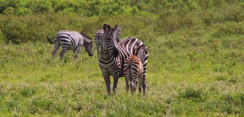 Safari - Welche Tiere kann man beobachten?