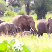Ultimatives Urlaubserlebnis in Afrika