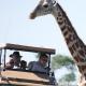 Safaris Impfungen - Impfschutz auf Safaris