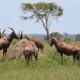 Die besten Orte für Safaris in Uganda