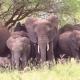 Tarangire-Nationalpark: Die besten Safari-Tipps
