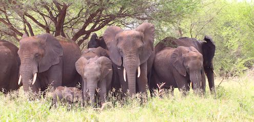 Tarangire-Nationalpark Safari Tipps