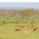 Luxussafari Uganda