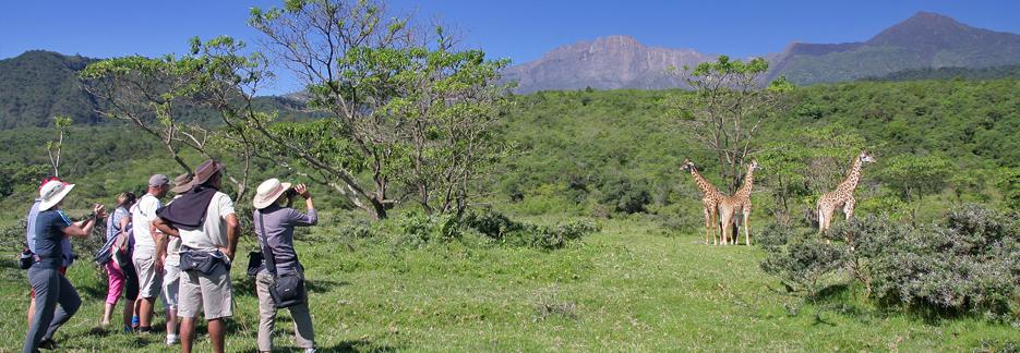 Afromaxx - Honeymoon Tansania Safari