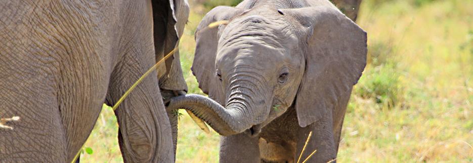 Honeymoon Safari Tansania