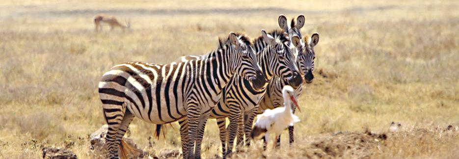 Afromaxx - Honeymoon Safari Tansania 2020