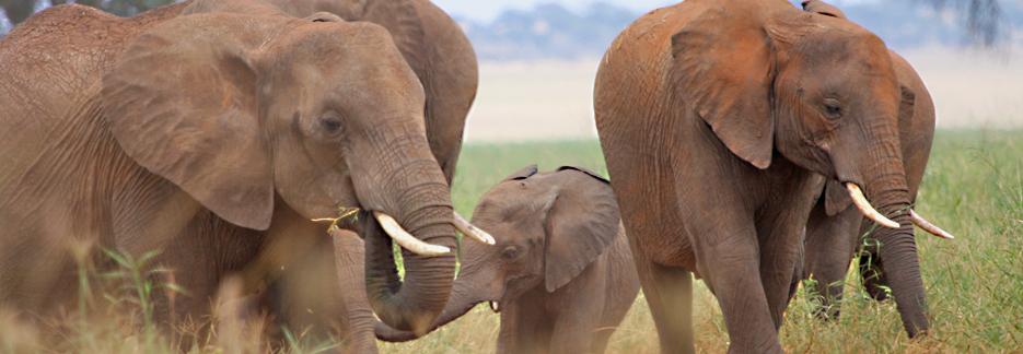 Afromaxx - Honeymoon Safari Tansania