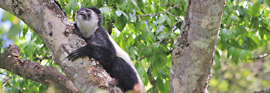 Reiseveranstalter Honeymoon Safari