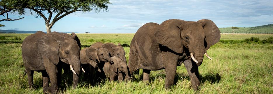 Afromaxx - Nord-Tansania-Reise mit Elefanten